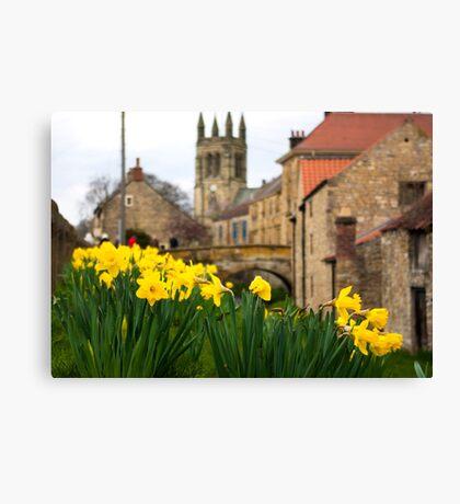 Helmsley Daffodills Canvas Print