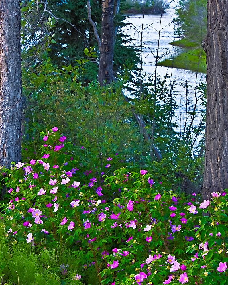 Wild Roses along the Yukon by Yukondick