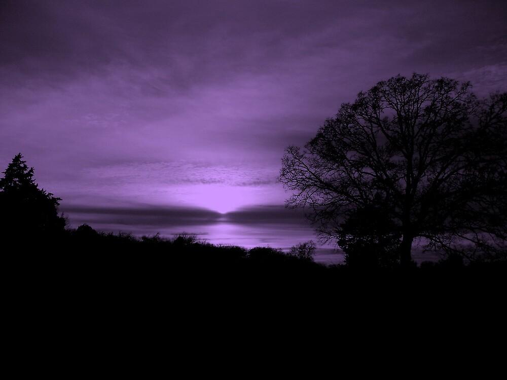 Magical Evening by Dawn di Donato