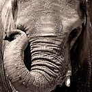 Sad Elephant by Virag Anna Margittai