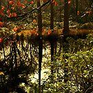 Golden green lake scene by moor2sea