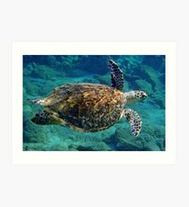 Hawksbill Turtle Art Print