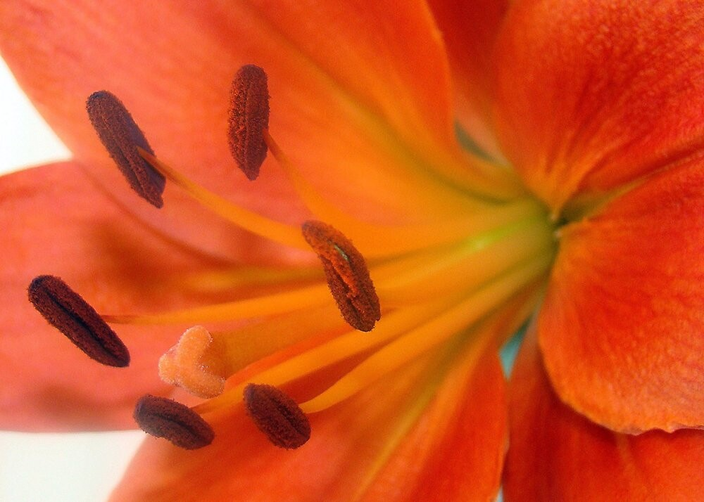 Bright Lilly! by PatChristensen