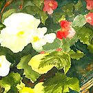 White Begonias by Sally Griffin