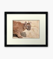 Cougar/Puma  _(Puma Concolor)_ Framed Print