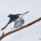 Taking Flight by Nancy Barrett