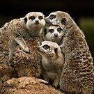 Meerkats by Natalie Manuel