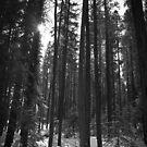 Trees and Shadows by Ellinor Advincula