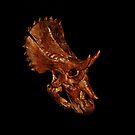 Triceratop Skull  by Rodney55