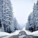 Driving Winter by Ellinor Advincula