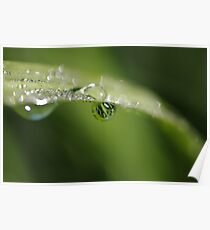 reflections in a raindrop Poster
