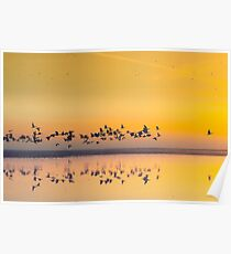 Sunrise in polder Poster