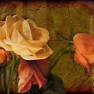 Roses by John Rivera