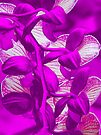 Orchid Collection - 9 by Marcia Rubin