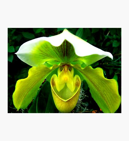 Orchid Collection - 11 Photographic Print