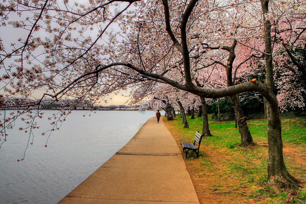 A Stroll Through The Park by BigD