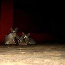 Here Kitty Kitty... by Akash Puthraya