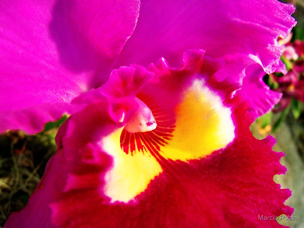 Orchid Collection - 19 by Marcia Rubin