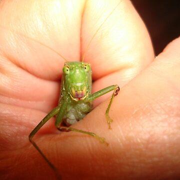 Safe in my hand...a katydid by MayLattanzio