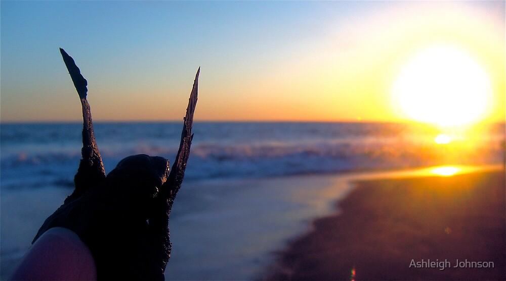 Baby Turtle in Beach Sunset by Ashleigh Johnson