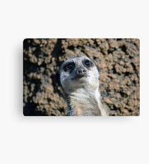 Amusing Meerkat Canvas Print