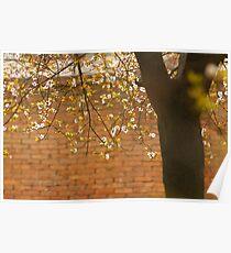 plum tree Poster