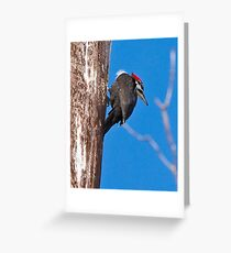 Female Pileated Woodpeckers Greeting Card