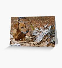 Oscar surveys piney woods Greeting Card