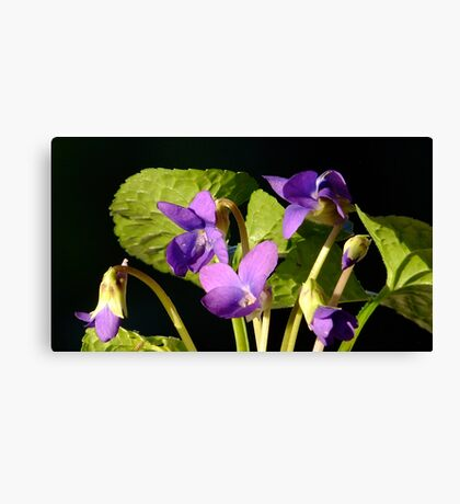 Sweet Violet! Canvas Print