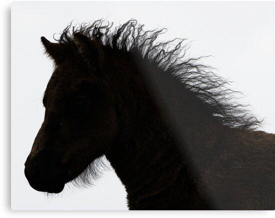 Shetland pony foal silhouette B/W by Frances Taylor