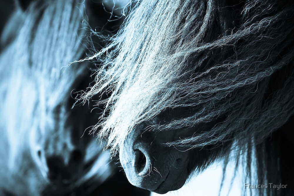 Shetland pony mares by Frances Taylor