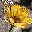 Urban Grunge Daisy by Jan Cartwright