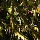 Trees and Moss by Jann Ashworth