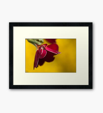 Damaged Red on Yellow Framed Print