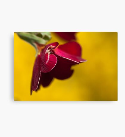 Damaged Red on Yellow Canvas Print