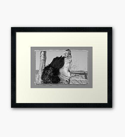 Howling Framed Print