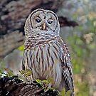 Buschman Park Owl by Deborah  Benoit