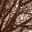 Branches by Joan Wild