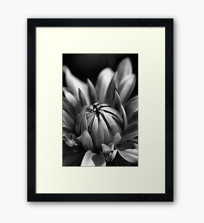 Dahlia Flower Framed Print