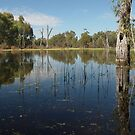 Reclaimed Swamp - Torrumbarry by Dave Callaway