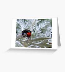 Orange and black beetle? Greeting Card
