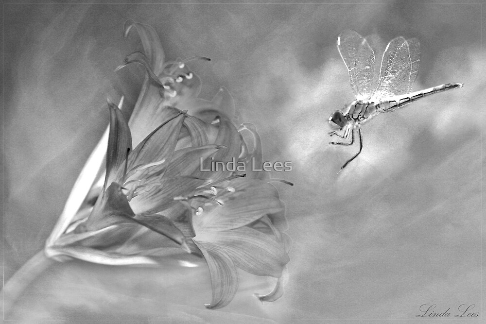 The Dragonfly and the Flower by Linda Lees