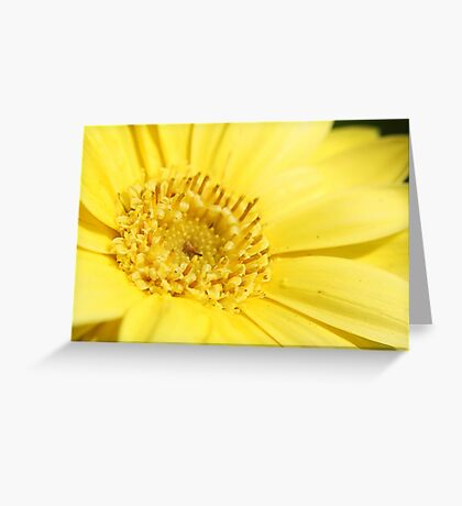 A Whole Lot Of Sunshine!! Greeting Card