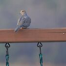 Mourning Dove Morning by Renee Blake