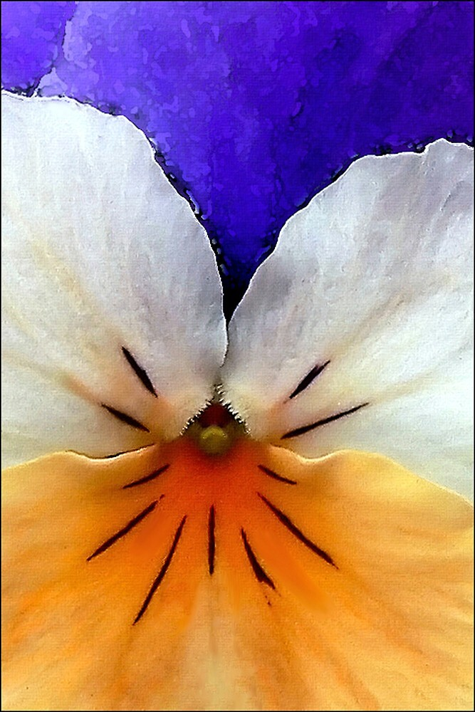 Proud to be a Pansy by paintingsheep