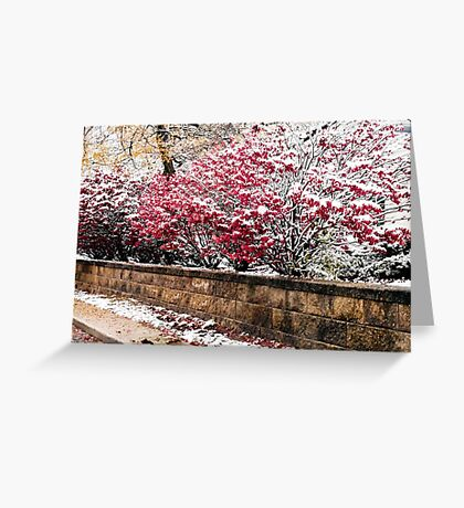 Boundary in the Snow Greeting Card