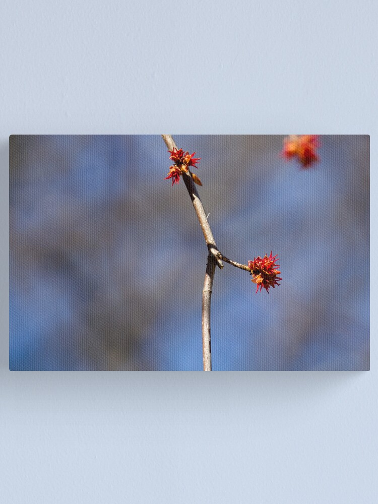 Alternate view of Illusive Spring Canvas Print