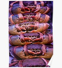 Crabs Tied Poster