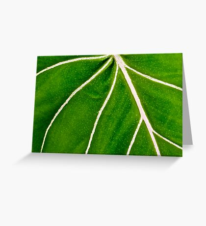 Variegated Veins Greeting Card