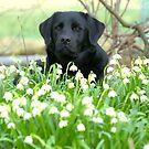 Spring at last by Alan Mattison